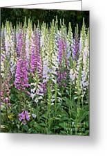 Foxglove Garden - Digital Art Greeting Card