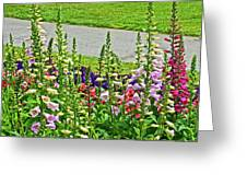Foxglove In Front Of Conservatory In Golden Gate Park In San Francisco, California  Greeting Card