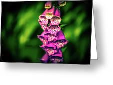 Foxglove Greeting Card