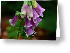 Foxgloves In The Rain Greeting Card