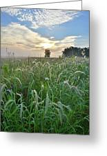 Foxtail Grasses In Glacial Park Greeting Card