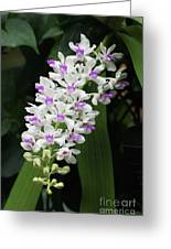 Foxtail Orchid Greeting Card