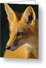 Foxy Lady Greeting Card