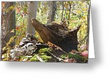 Foxy Stump Greeting Card
