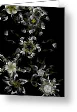 Fractal Floral Pattern Black Greeting Card