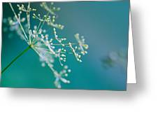 Fragile Dill Umbels Greeting Card