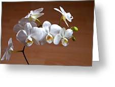 Fragile Orchid  Greeting Card