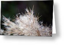 Fragile Seeds Greeting Card