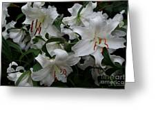 Fragrant Beauties Greeting Card