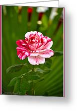 Fragrant Pink Greeting Card