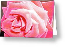 Fragrant Rose Greeting Card
