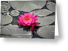 Fragrant Water Lily Greeting Card