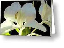 Fragrant White Ginger Greeting Card