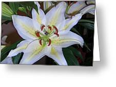 Fragrant White Lily Greeting Card