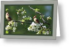 Framed Cardinals In Spring Greeting Card