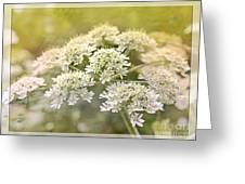 Framed Cow Parsley Greeting Card