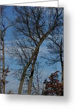 Framed In Oak - 2 Greeting Card