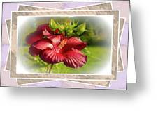 Framed Red Hibiscus Greeting Card