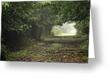 Framed Summer Woods Greeting Card