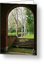 Framed Sycamores Greeting Card