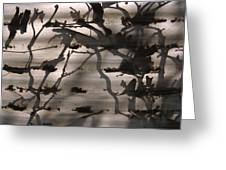 France, Paris, Tree Branches Reflected Greeting Card