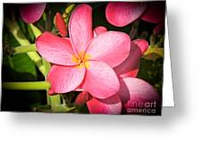 Frangipani Blossom Greeting Card