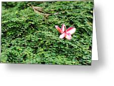 Frangipani Flower Greeting Card