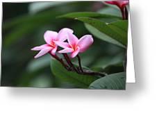 Frangipani Greeting Card
