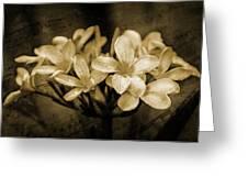 Frangipani In Sepia Greeting Card