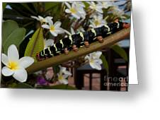 Frangipani Tree And Caterpillar Greeting Card