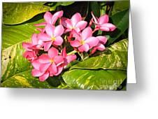 Frangipanis In Bloom Greeting Card