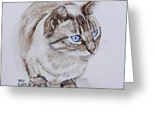 Frankie The Cat Greeting Card