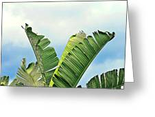 Frayed Palm Fronds Against Blue Sky Greeting Card