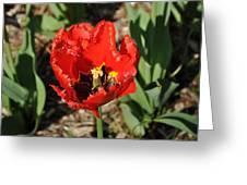 Frayed Tulip Greeting Card