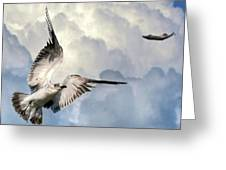 Free Fly Greeting Card
