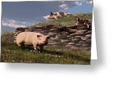 Free Range Pigs Greeting Card