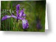 Free Ranging Wild Iris Greeting Card