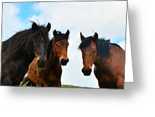 Free Wild Horses On The Mountain Greeting Card