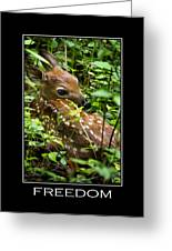 Freedom Inspirational Motivational Poster Art Greeting Card by Christina Rollo