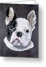 French Bulldog Close Up Greeting Card