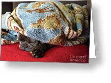French Bulldog Naps Under A Blanket-1 Greeting Card