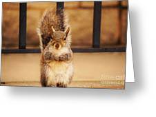 French Fry Eating Squirrel2 Greeting Card