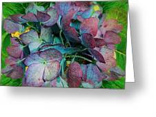 French Hydrangea Rainbow Greeting Card