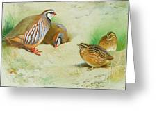 French Partridge By Thorburn Greeting Card