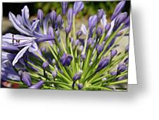 French Quarter Floral Greeting Card