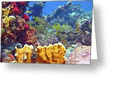 French Reef 1 Greeting Card