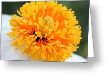 Frenzy Of Stamens Greeting Card