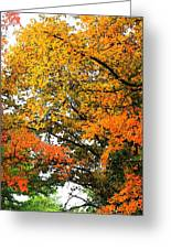 Fresco Autumn Diptych Right Greeting Card