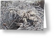 Fresh Coat Of Snow Greeting Card