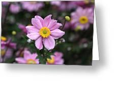 Fresh Field Flowers Greeting Card